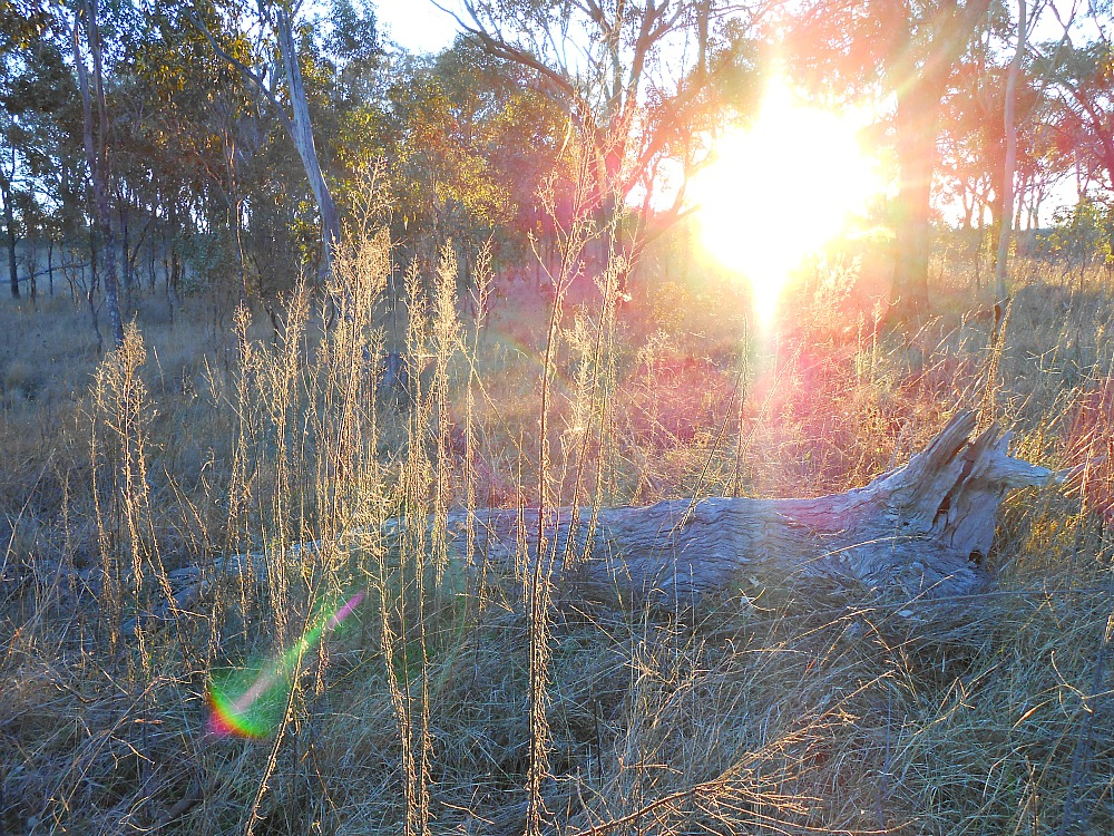 glowing grasses