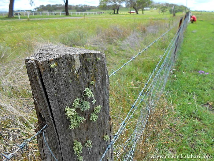 how to build a goat proof fence