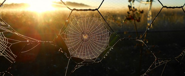 glowing spiderweb