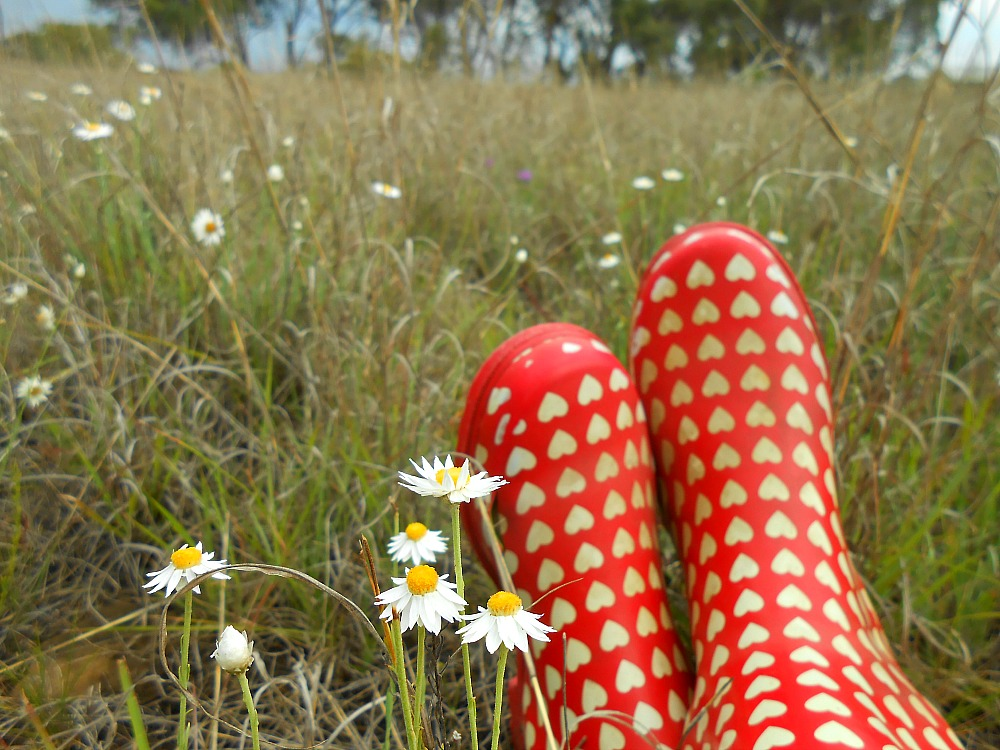 daisies and gum boots