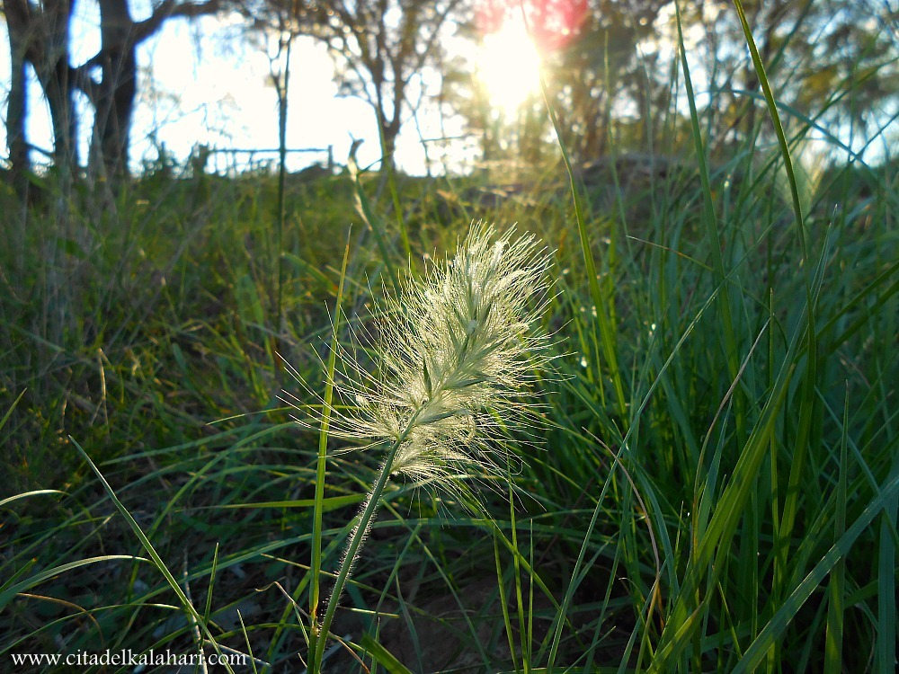 grass in setting sun