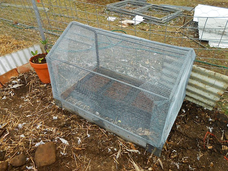 seedling cage