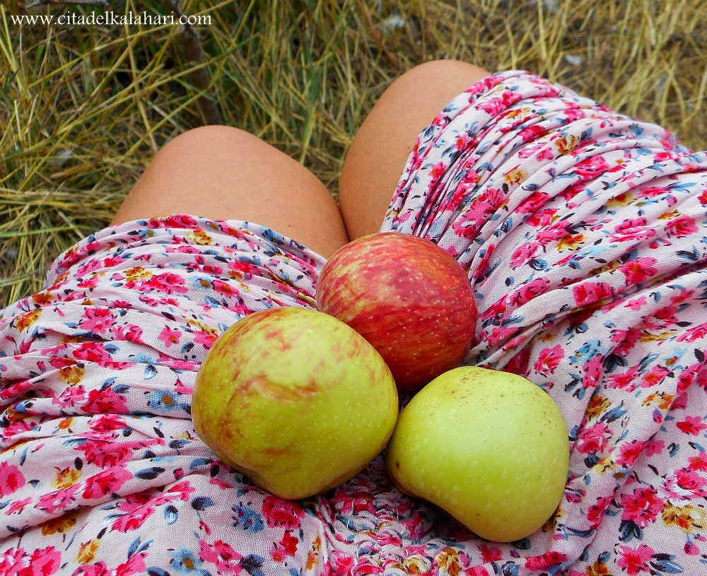 lap of apples