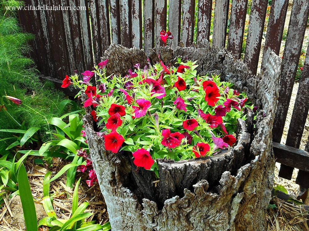 stump filled with flowers